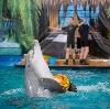 Дельфинарии, океанариумы в Кушнаренково